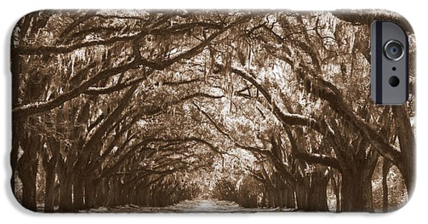 Savannah iPhone Cases - Savannah Sepia - Glorious Oaks iPhone Case by Carol Groenen