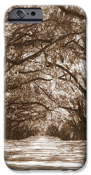 Savannah Sepia - Glorious Oaks iPhone Case by Carol Groenen