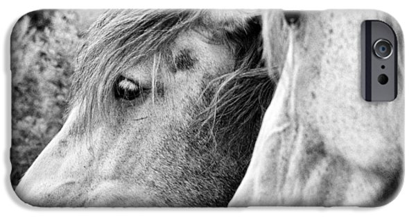 The Horse iPhone Cases - Scent Of Flowers-bw iPhone Case by Luc Bovet