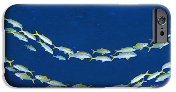 Multiple iPhone Cases - School Of Fish Great Barrier Reef iPhone Case by Panoramic Images