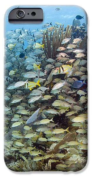Schools Of Grunts, Snappers, Tangs iPhone Case by Karen Doody