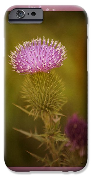 Thistle iPhone Cases - Scotch Thistle iPhone Case by Holly Kempe