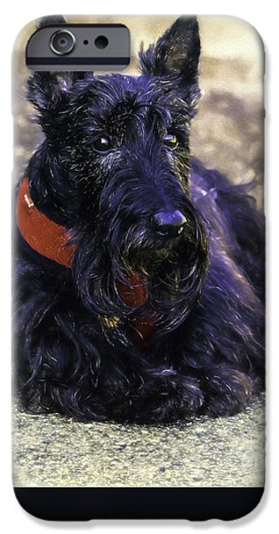Dog Close-up iPhone Cases - Scottie Scooter iPhone Case by Jean OKeeffe Macro Abundance Art