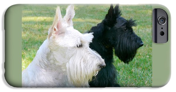 Scottish Terrier Art iPhone Cases - Scottish Terrier Dogs iPhone Case by Jennie Marie Schell