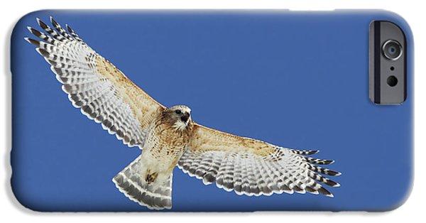 Spirit Hawk iPhone Cases - Screaming Hawk iPhone Case by Mircea Costina Photography