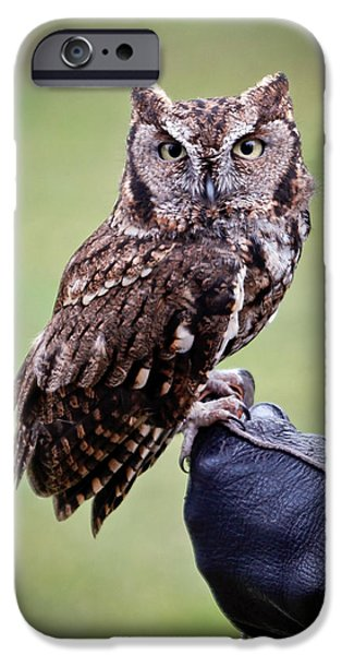 Screech Owl Perched iPhone Case by Athena Mckinzie