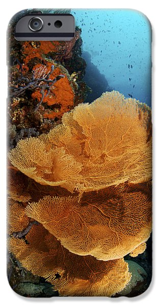 Sea Fan Coral - Indonesia iPhone Case by Steve Rosenberg - Printscapes