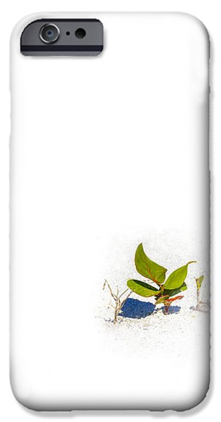 White Sand iPhone Cases - Sea Grape iPhone Case by Marvin Spates