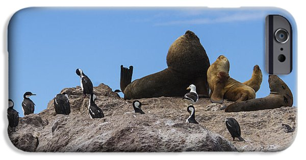 Marine iPhone Cases - Sea lion family with birds iPhone Case by Hernan Caputo