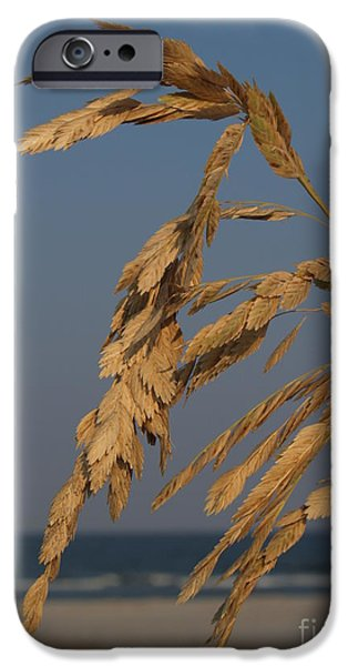 Sea Oats at Hunting Island State Park iPhone Case by Anna Lisa Yoder