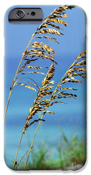 Sea Oats Gulf of Mexico iPhone Case by Thomas R Fletcher