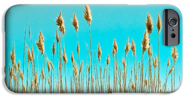 Abstract Seascape iPhone Cases - Sea Oats on Turquoise Sky iPhone Case by Colleen Kammerer
