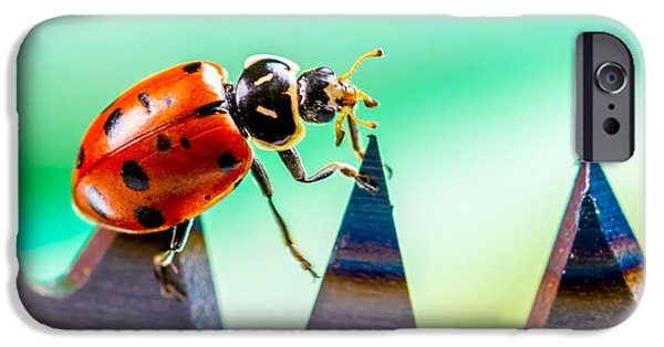 Ladybug iPhone Cases - Sea of Pain iPhone Case by TC Morgan