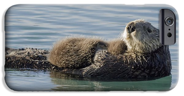 Bonding iPhone Cases - Sea Otter  Enhydra Lutris  Female iPhone Case by Thomas Kline