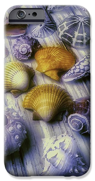 Marine iPhone Cases - Sea Shell Arrangement  iPhone Case by Garry Gay