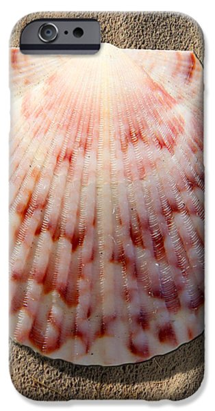Sea Shell iPhone Case by Mike McGlothlen