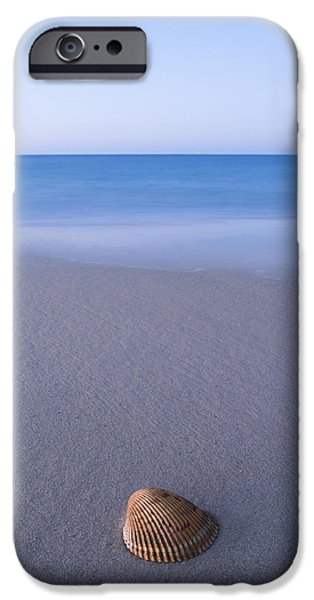 Sea iPhone Cases - Sea Shell iPhone Case by Noah Bryant