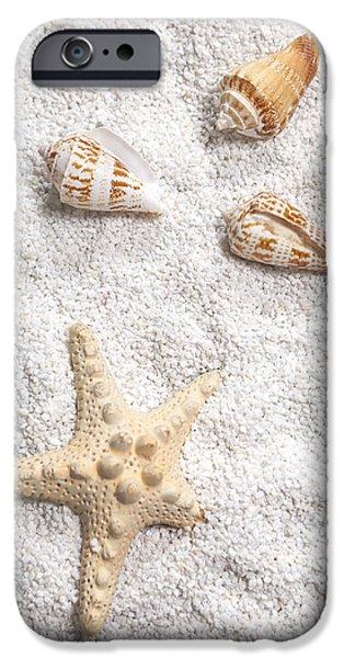 Sea Shell iPhone Cases - Sea Shells iPhone Case by Joana Kruse