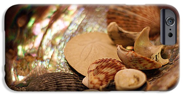 Abalones iPhone Cases - Sea Treasures iPhone Case by Cricket Hackmann
