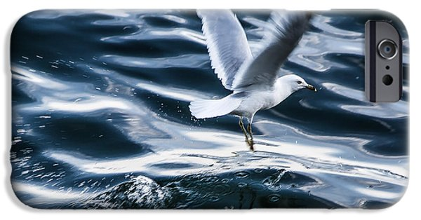 Sea Birds iPhone Cases - Seagull 2 iPhone Case by Olga Photography