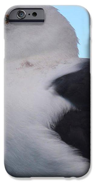 Seagull iPhone Case by Aidan Moran