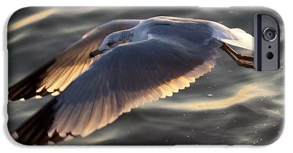 Flying Seagull iPhone Cases - Seagull Flight iPhone Case by Dustin K Ryan