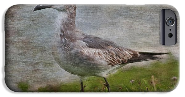 Flying Seagull Paintings iPhone Cases - Seagull Friend iPhone Case by Deborah Benoit