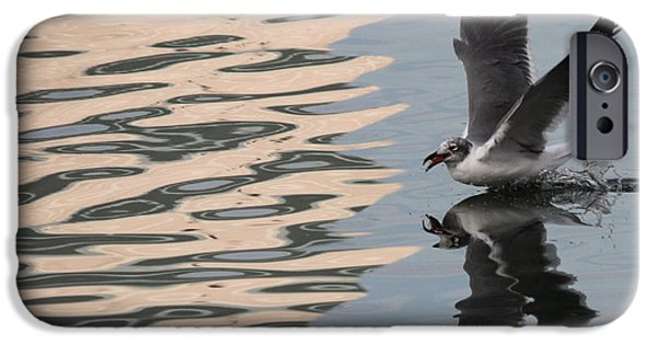 Seagull iPhone Cases - Seagull Fun iPhone Case by Carol Groenen