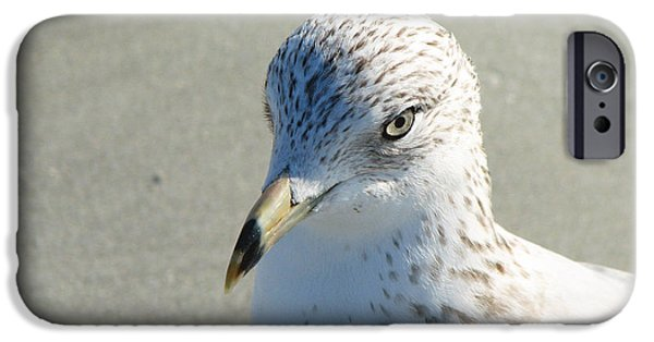 Sea Birds iPhone Cases - Seagull Portrait iPhone Case by Sabrina Wheeler