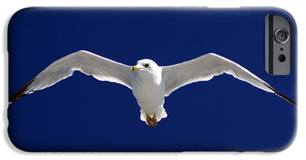 Beach iPhone Cases - Seagull In Flight iPhone Case by John Turner