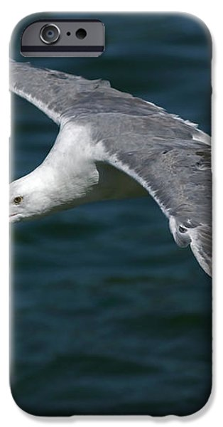 Seagull  in Flight iPhone Case by Randall Ingalls