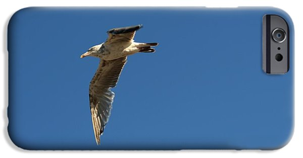 Seagull Pyrography iPhone Cases - Seagull in Mid Flight iPhone Case by Robert Morin