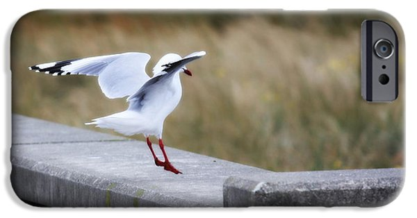Flying Seagull iPhone Cases - Seagull Landing iPhone Case by Karen Wood