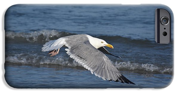 Sea Birds iPhone Cases - Seagull On A Mission iPhone Case by Joan Kaplan