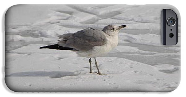 Wintertime iPhone Cases - Seagull on the Frozen Pond iPhone Case by Jari Hawk