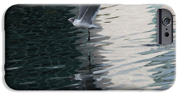 Florida Wildlife iPhone Cases - Seagull Reflection over Blue Bay iPhone Case by Carol Groenen