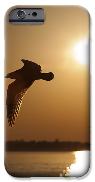 Flying Seagull iPhone Cases - Seagull Sunset iPhone Case by Dustin K Ryan