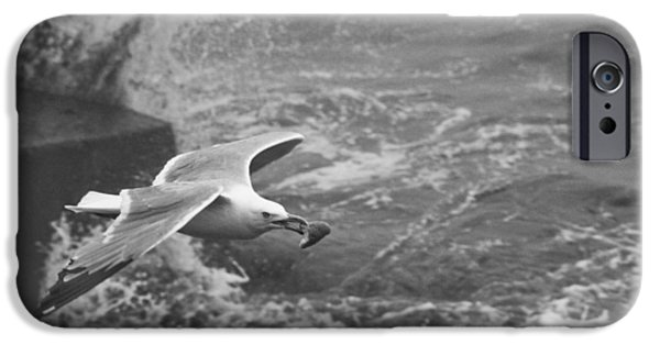 Flying Seagull Pyrography iPhone Cases - Seagull with Bread iPhone Case by Steven Natanson