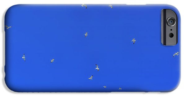 Flying Seagull iPhone Cases - Seagulls In The Blue Sky iPhone Case by Joana Kruse