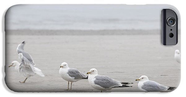Mist iPhone Cases - Seagulls on foggy beach iPhone Case by Elena Elisseeva