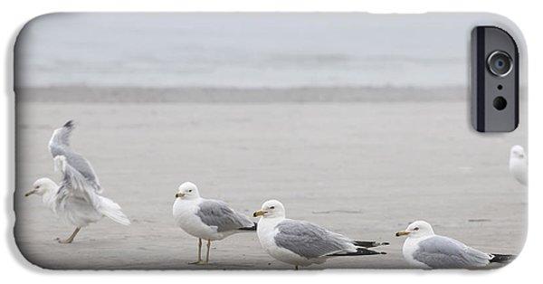 Seabirds iPhone Cases - Seagulls on foggy beach iPhone Case by Elena Elisseeva