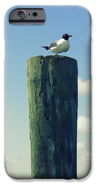 Flying Seagull iPhone Cases - Seagulls Rest iPhone Case by Laurie Perry
