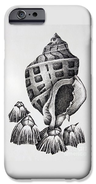 Pen And Ink Framed Prints iPhone Cases - Seashell and Barnacles iPhone Case by James Williamson