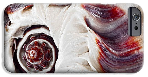 Fragment iPhone Cases - Seashell detail iPhone Case by Elena Elisseeva