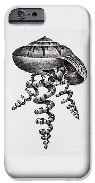 Pen And Ink Framed Prints iPhone Cases - Seashell Forms iPhone Case by James Williamson
