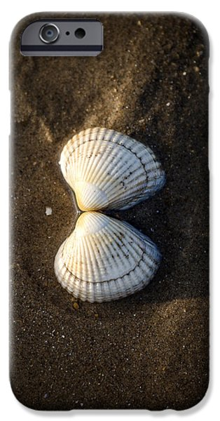 Marine iPhone Cases - Seashell iPhone Case by Joana Kruse