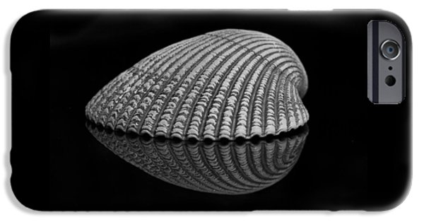 Marine iPhone Cases - Seashell Study iPhone Case by Morgan Wright