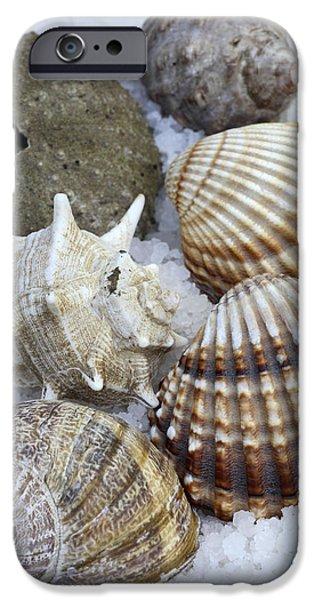 Sea Life iPhone Cases - Seashells iPhone Case by Frank Tschakert