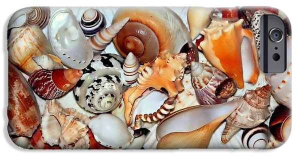 Jordan iPhone Cases - Seashells Seashells iPhone Case by Rosanne Jordan