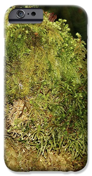 Seasons of Magic - Hoh Rainforest Olympic National Park WA iPhone Case by Christine Till